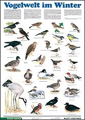 Vogelwelt im Winter